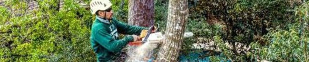 E701347ed08b20c3d1c678442730a4a4.tree services