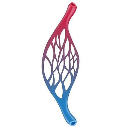 Capillarysymbol