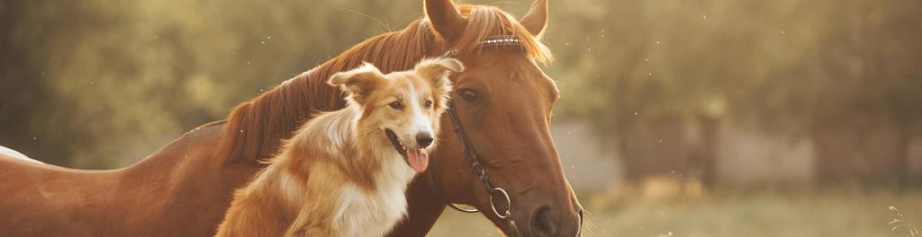 Banixx dog horse