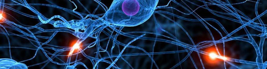 Active 20neuron 20 117233961
