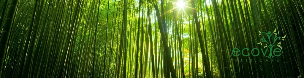 Bamboo forest 195187 1920x1200