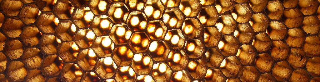 1024px apis florea nest closeup2