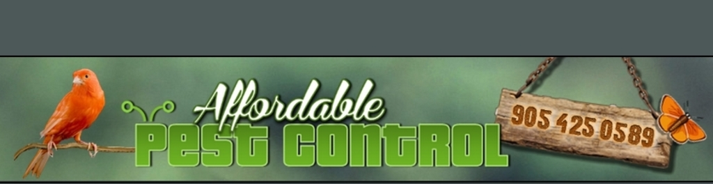 Affordable 20pest 20control 20  201