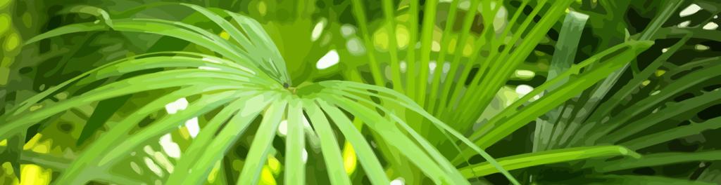 Palmfrondsfrmvect
