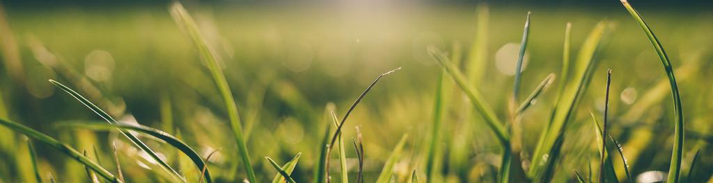 Bg grass