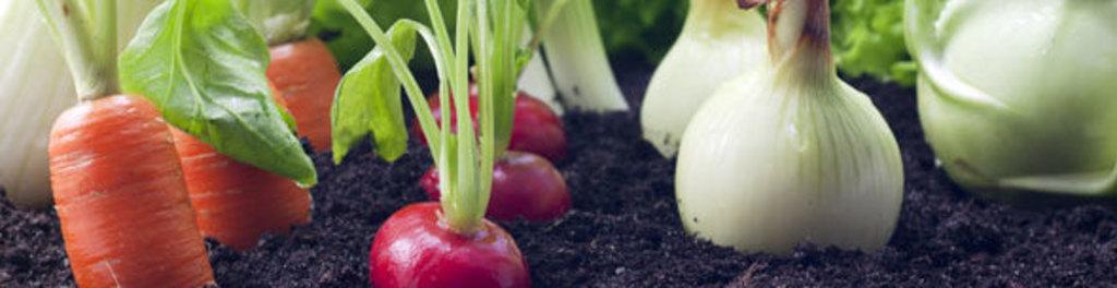 Organic Edibles - AgTech | Hamirpur, Himachal Pradesh, India