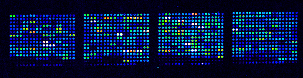 Microarray 20data